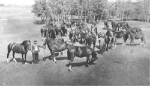 Les chevaux d'Edmond Dhuez