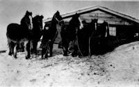 Les «timmes» de chevaux à Antonio Desnoyers