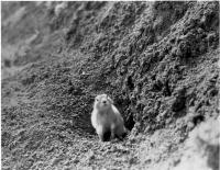 Un gopher sortant de son trou